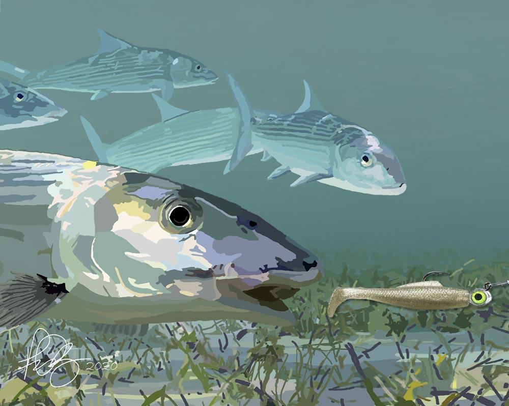 This image has an empty alt attribute; its file name is Shady-Bonefish.jpg